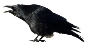 die Krähe ruft den Datenschutz aus